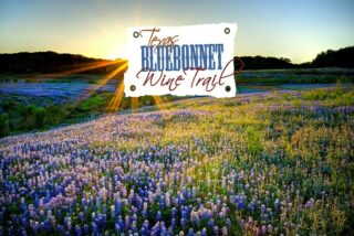 March is here and that means spring is on the way! 🌼🌱What is your favorite thing about spring? We just LOVE all of the Texas wildflowers in bloom as much as we love Texas wine! 😍Follow our bio link for more details about the Texas Bluebonnet Wine & Cheese Trail this month!  Our Member Wineries 🍷 @bernhardtwinery @messina_hof @peach_creek_winery @perrinewinery @pleasanthillwinery @saddlehornwinery @texasstarwinery @westsandycreekwinery . . . . #texaswinetrail #texasbluebonnets #springwinetrail #texasbluebonnetwinetrail #wineandcheese #wineandcheesepairings #instawine #texaswine #txwine #texaswinery #texasvineyard #texaswinecountry #texaswinetour #texaswinelover #uncorktexaswine #traveltexas #visittexas #texashighways #365hou