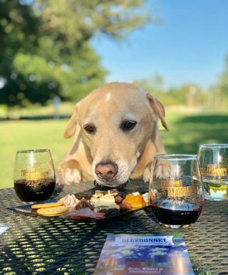 Shouldn't we all have the life of a winery dog? 🍷🐶 Visit the link in our bio for more details about the #OctoberWineAndSausageTrail wine pairings! • • • • #winetasting #winerydogs #winetour #winepairing #cheers #uncork #wine #winery #winerylovers #instawine #texaswine #txwine #texaswineries #texasvineyard #texaswinecountry #texaswinetour #texaswinelover #uncorktexaswine #traveltexas #visittexas #texashighways #texasbluebonnetwinetrail #fallwinetrail #octoberwinetrail #texaswinemonth @bernhardtwinery@corkthiswinerymontgomery@messina_hof@peach_creek_winery@perrinewinery@pleasanthillwinery@saddlehornwinery@texasstarwinery